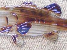 Bass,largemouth,fish,freshwater,fishing